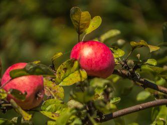 Kelowna Orchards & Markets
